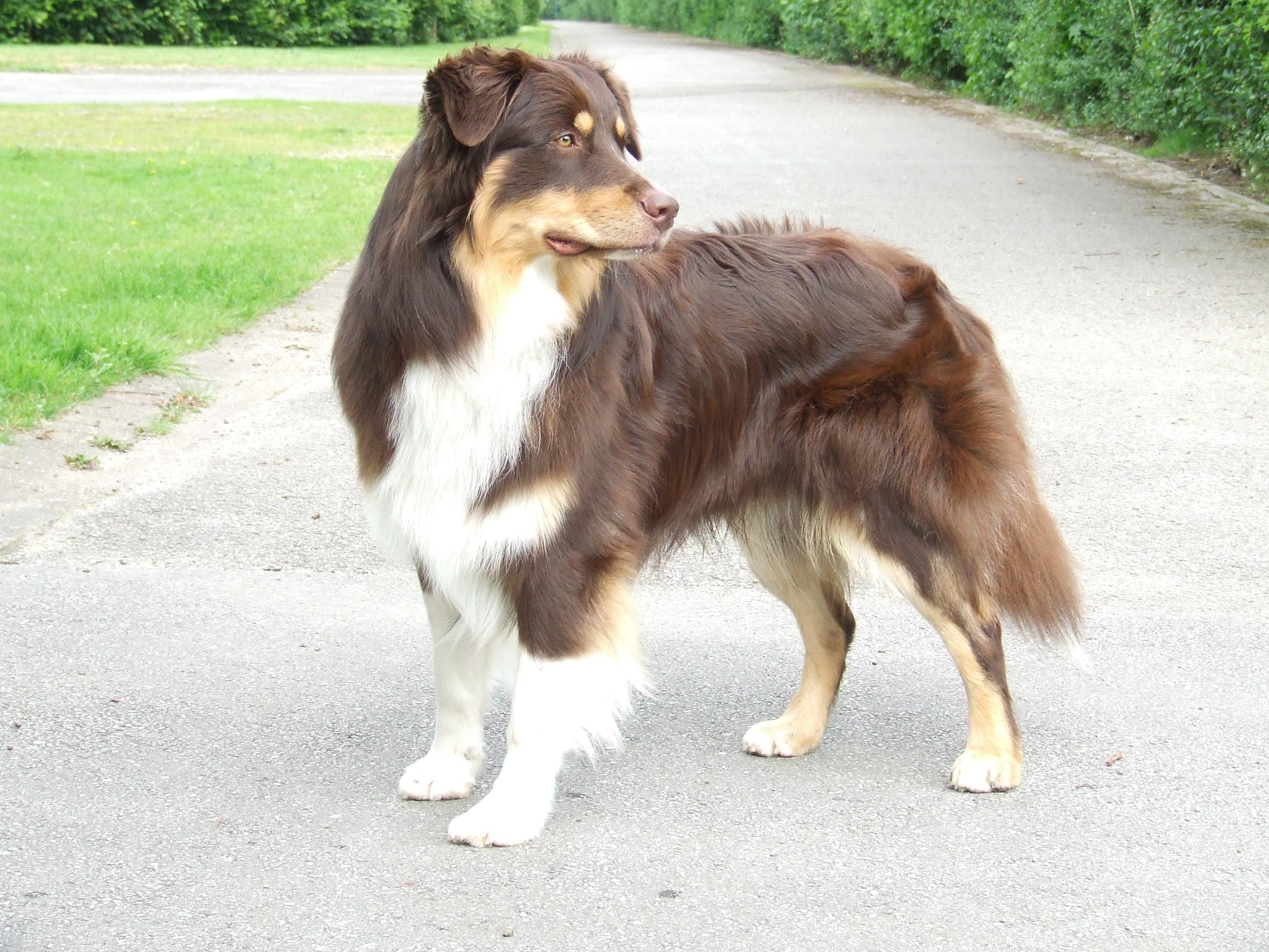 Maddox mit ca. 1,5 Jahren