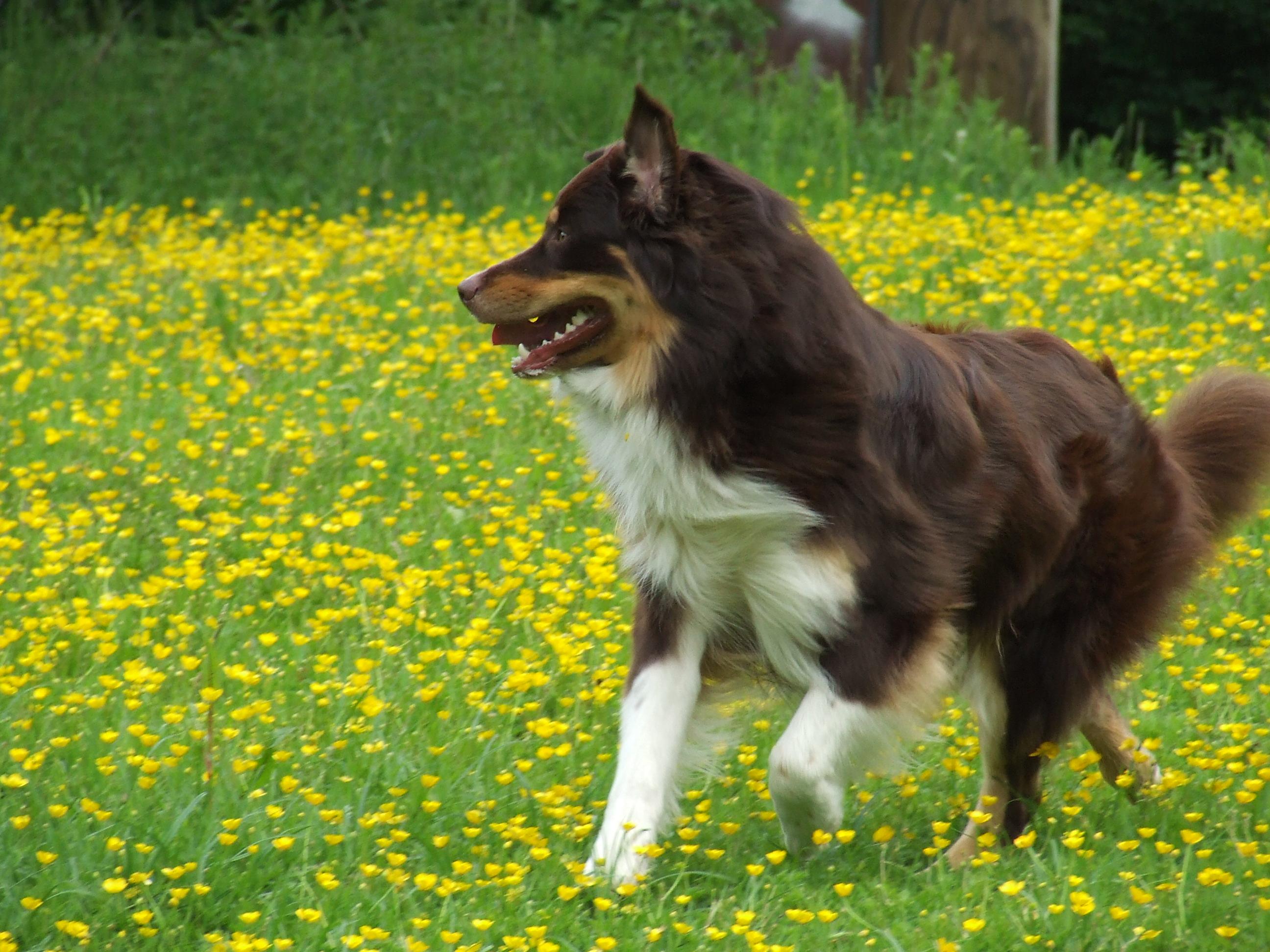 Maddox auf einer Blumenwiese