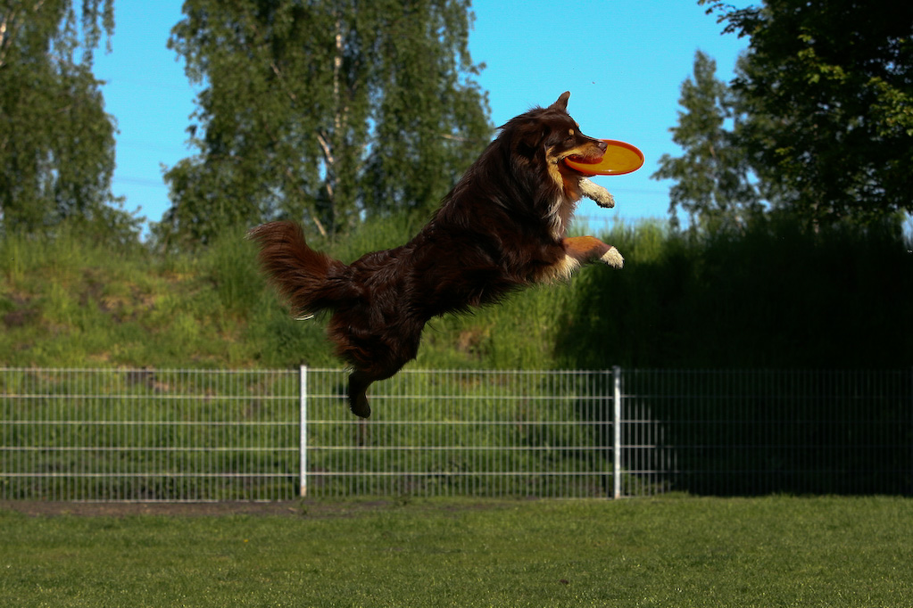 Maddox spielt am liebsten Frisbee