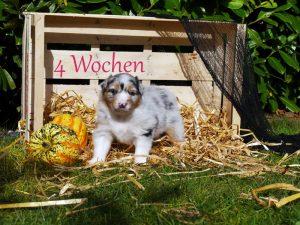 Welpe9-4Wochen