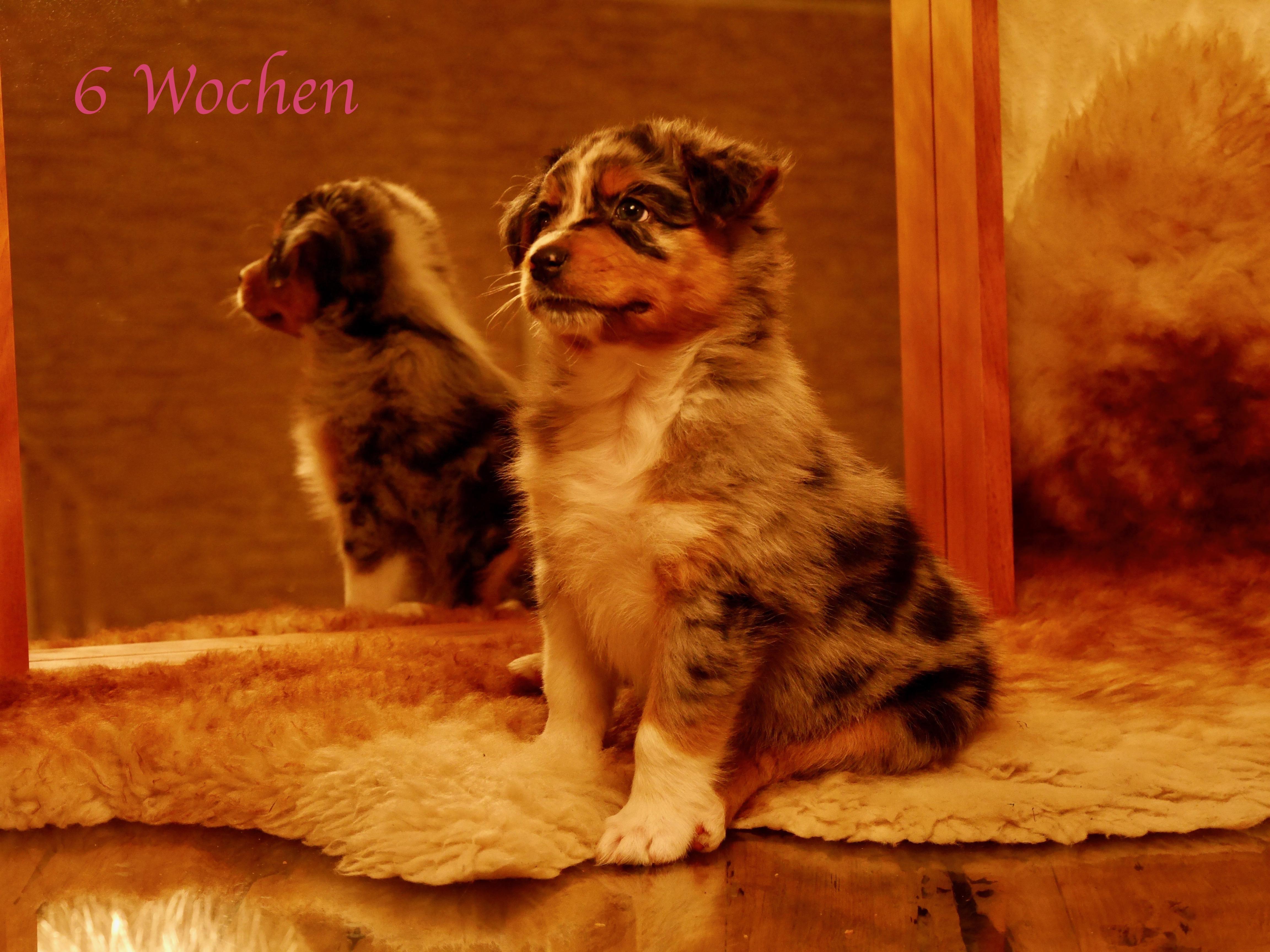 Macy 6 Wochen alt