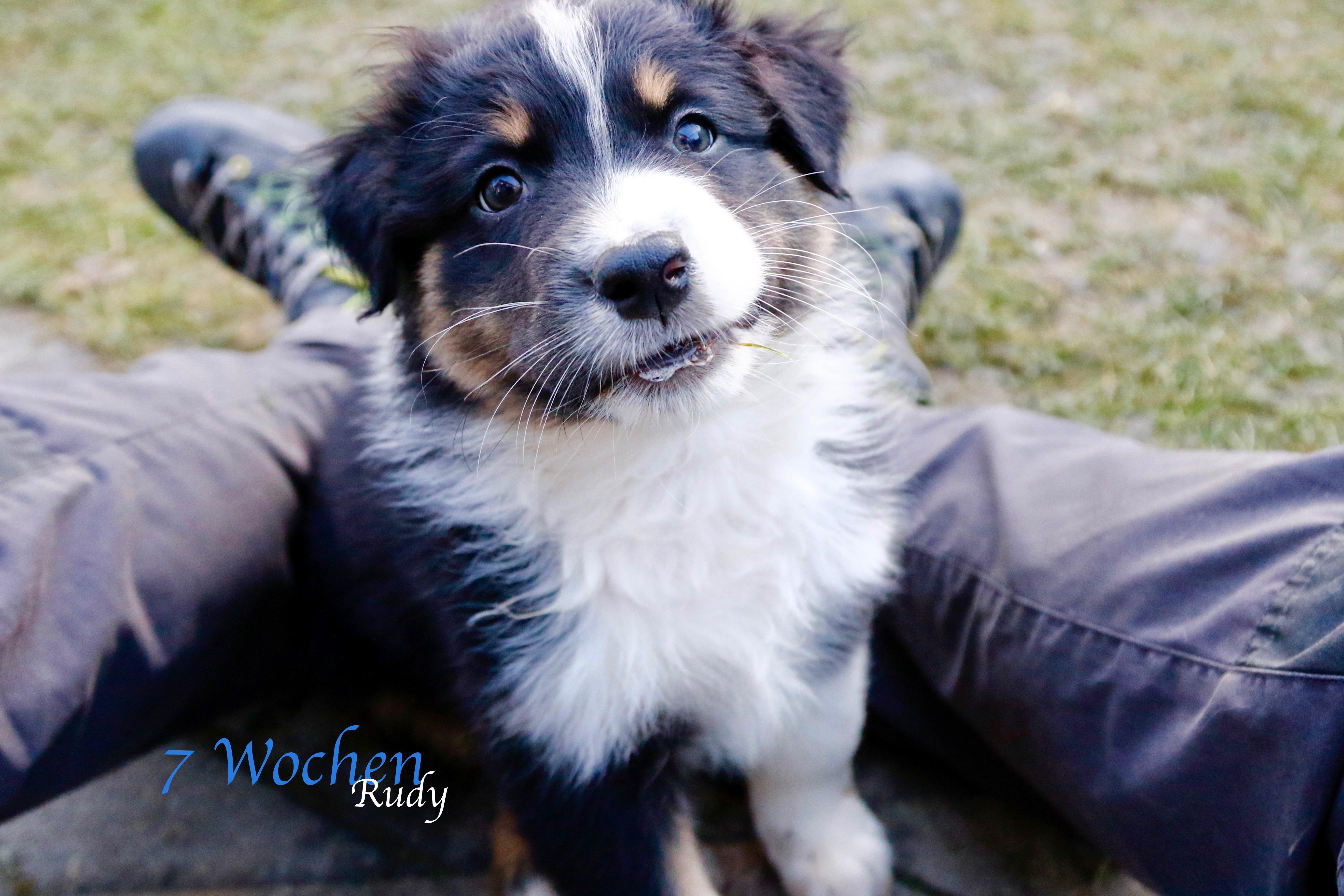 Rudy 7 Wochen