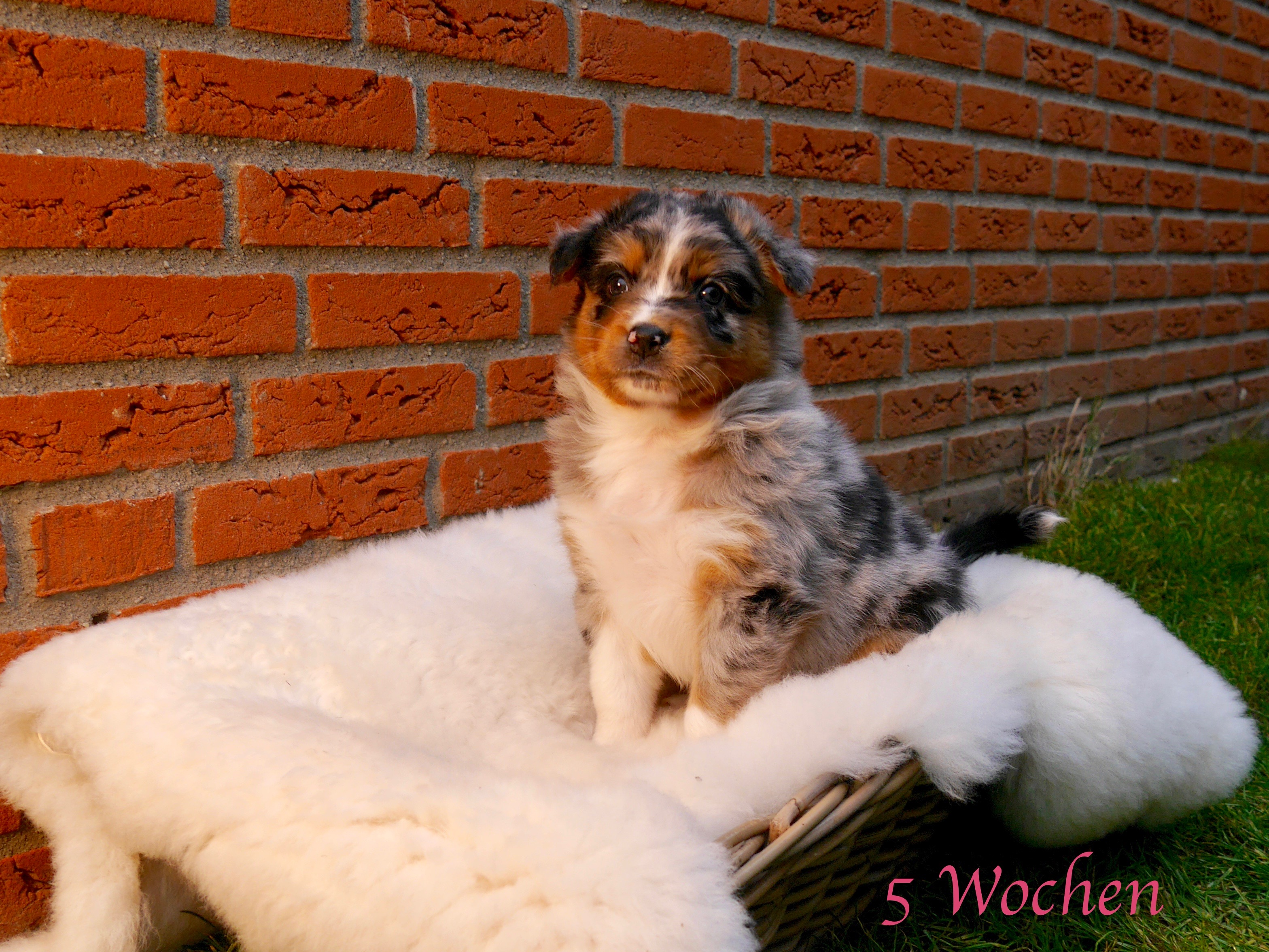 Welpe 3 5 Wochen