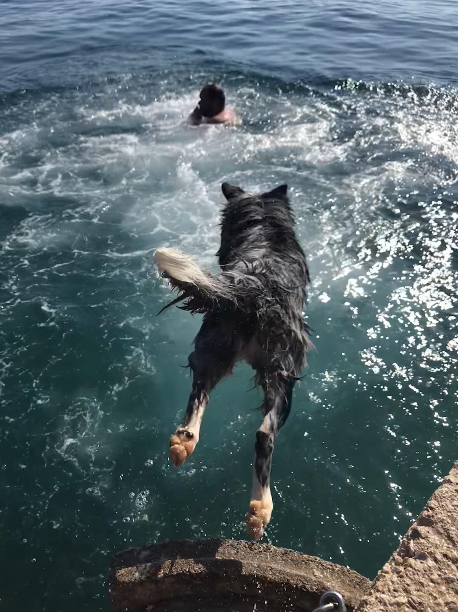 Kamri springt ins Wasser