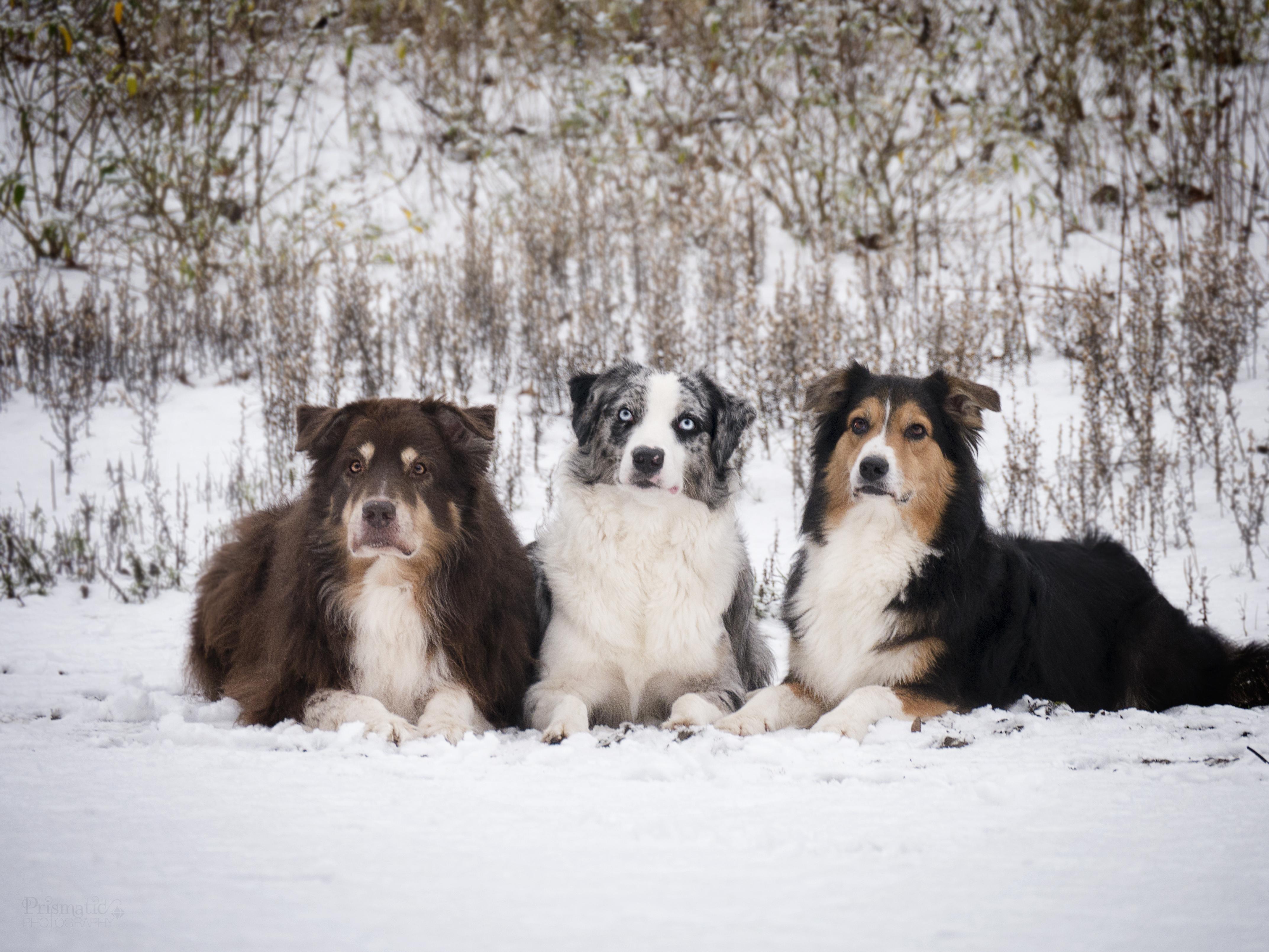 Maddox, Kamri und Marni