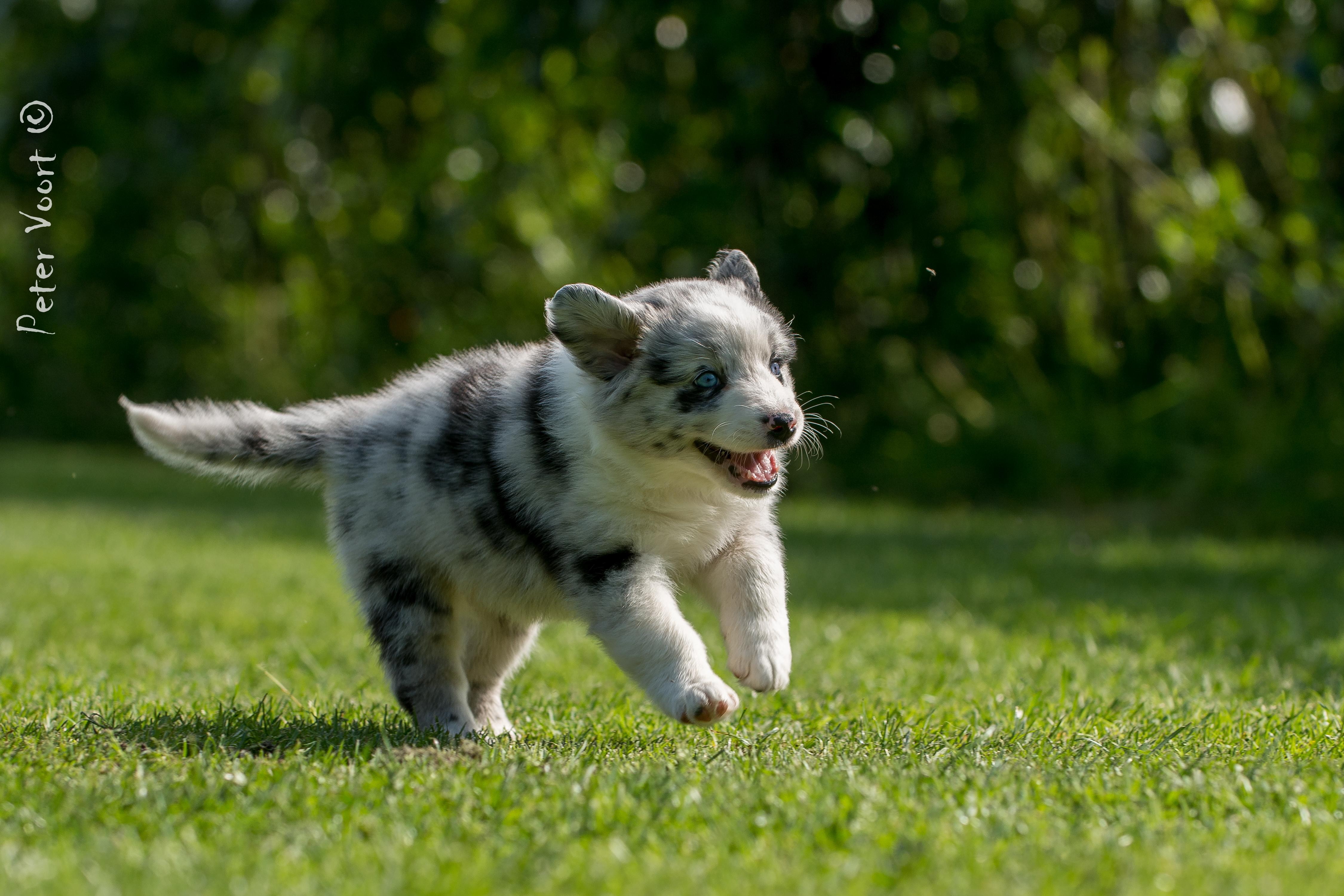 Baby Kamri rennt