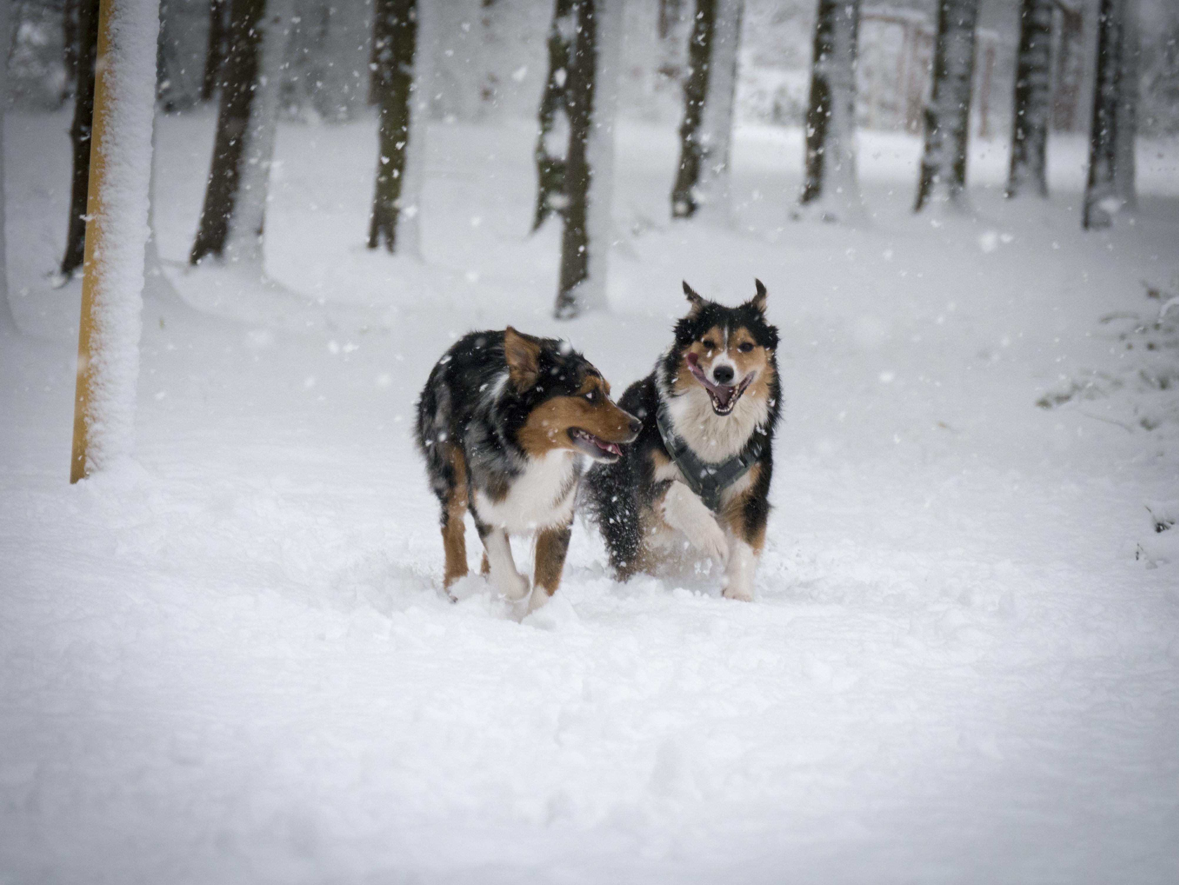 Macy und Marni im Schnee