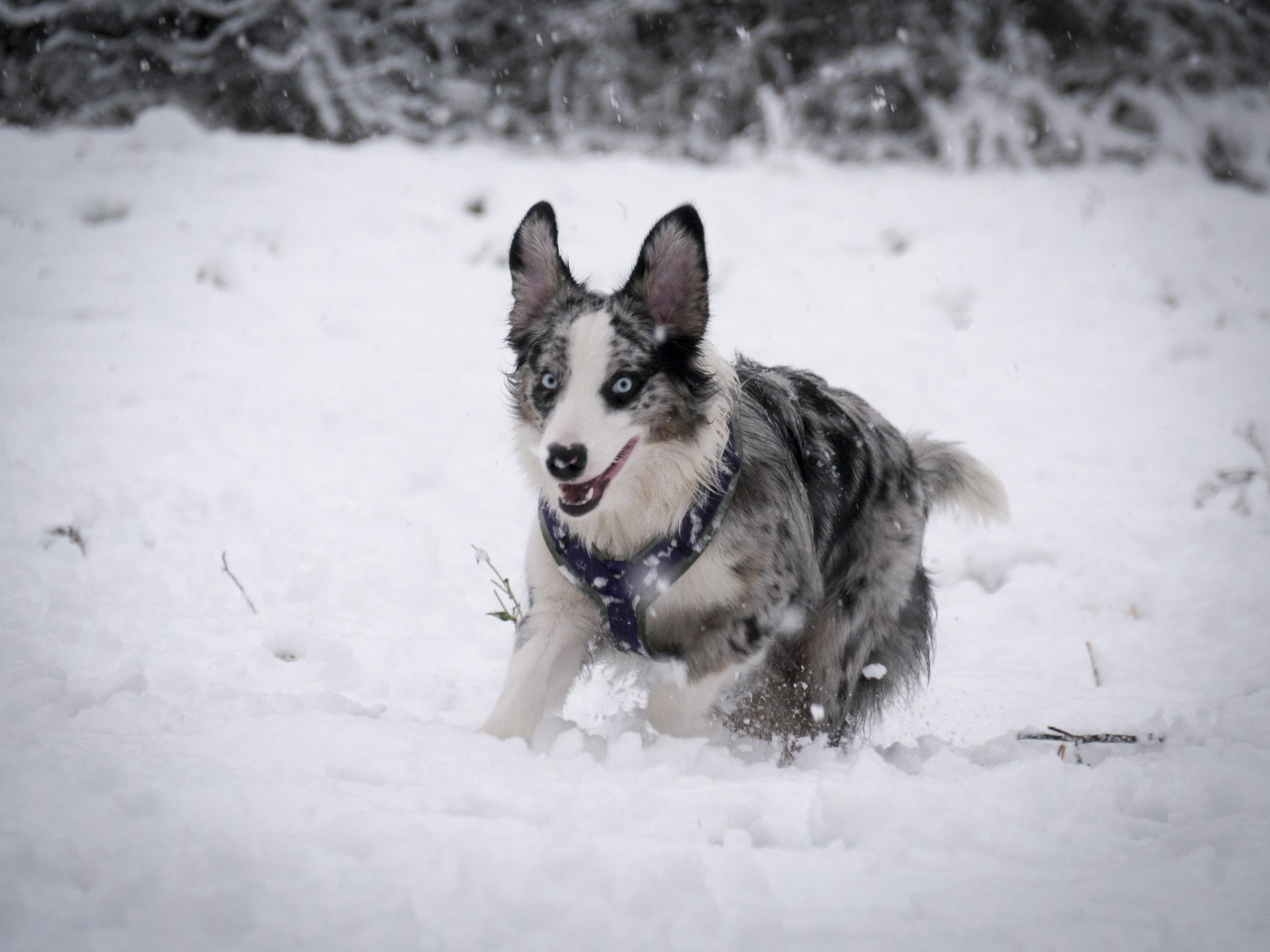 Kamri im Schnee