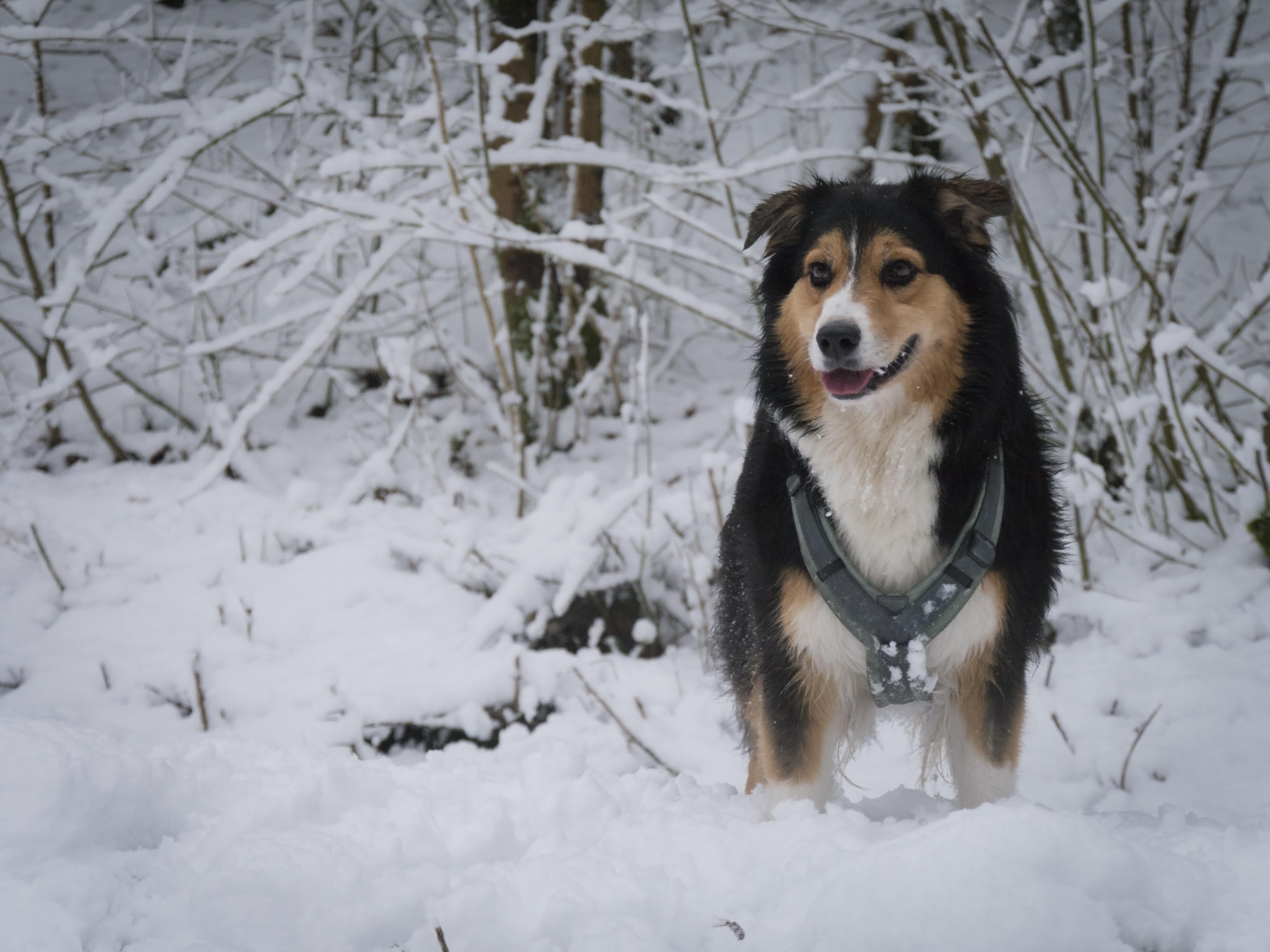 Marni im Schnee
