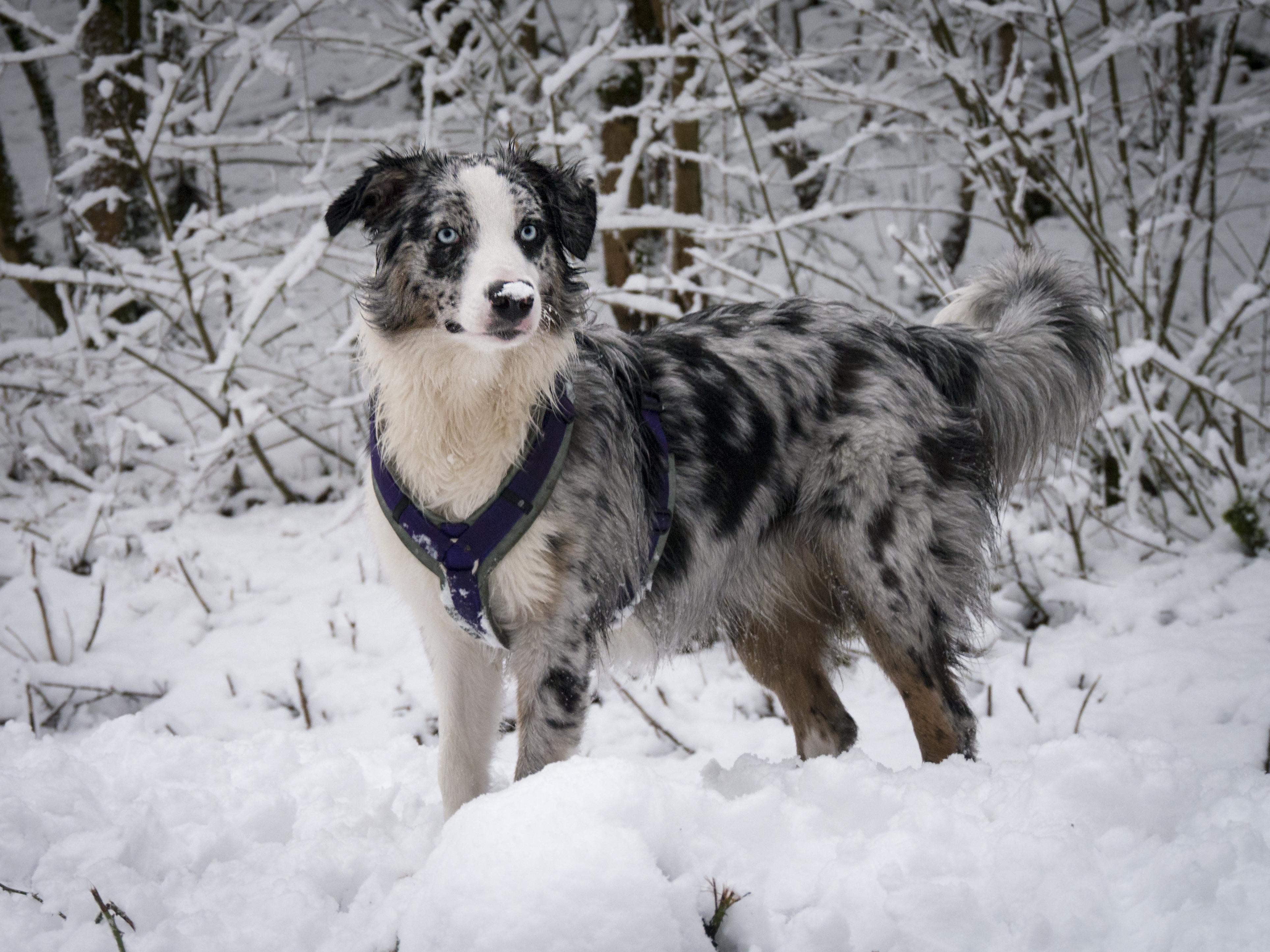 Kamri mit Schnee auf der Nase
