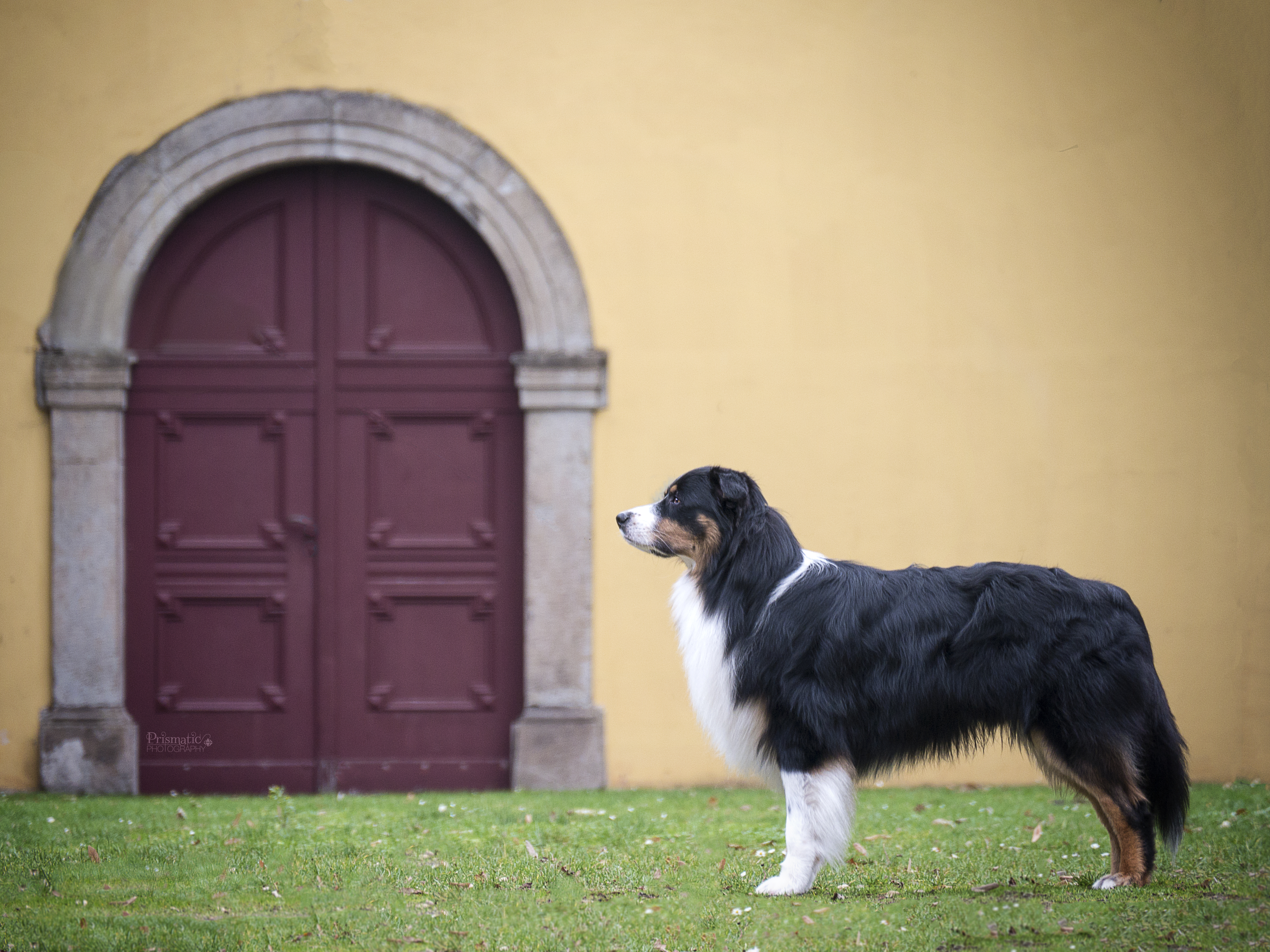 Rudy am Schloss