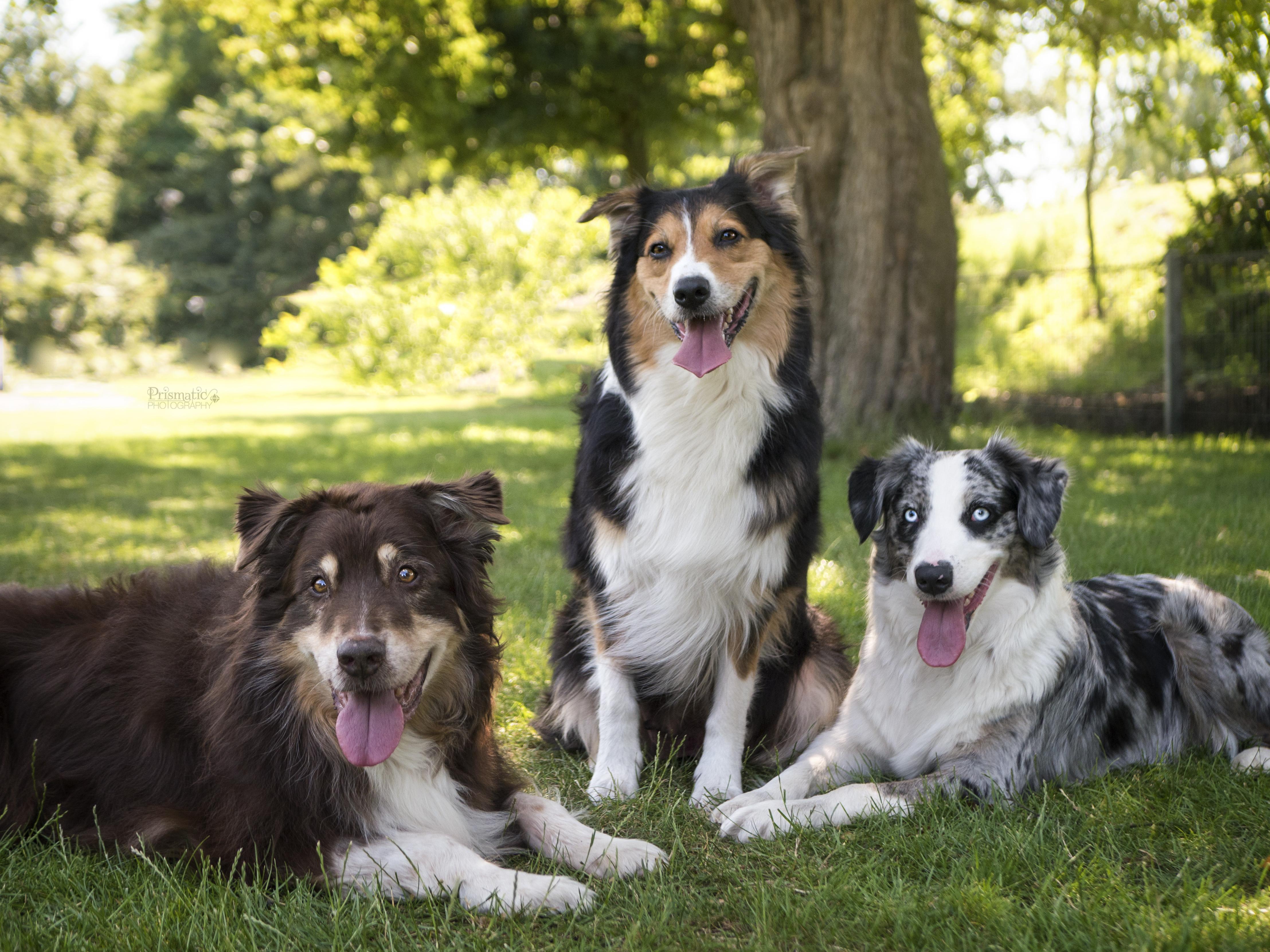 Maddox, Marni und Kamri