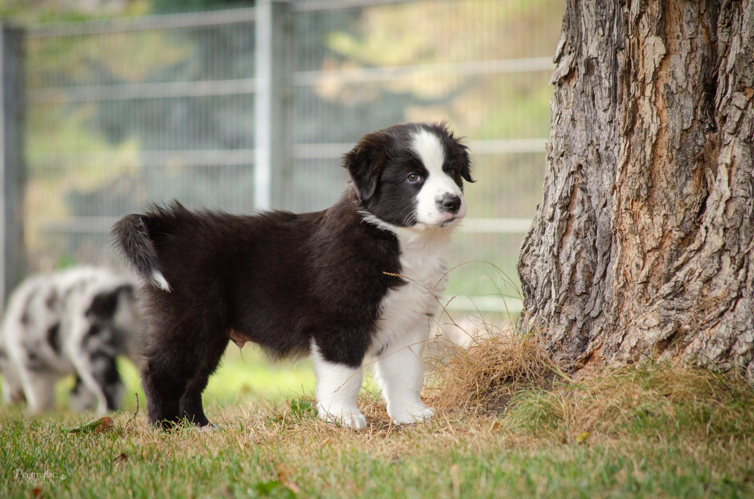 Bux auf dem Hundeplatz