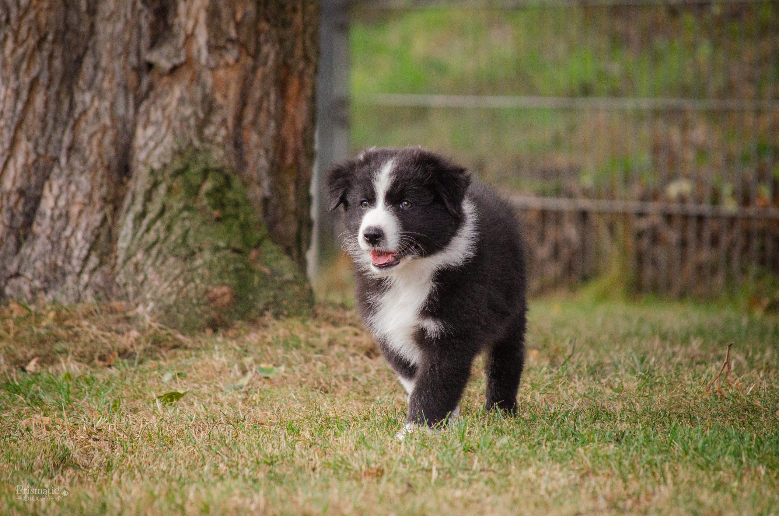 Rynn auf dem Hundeplatz
