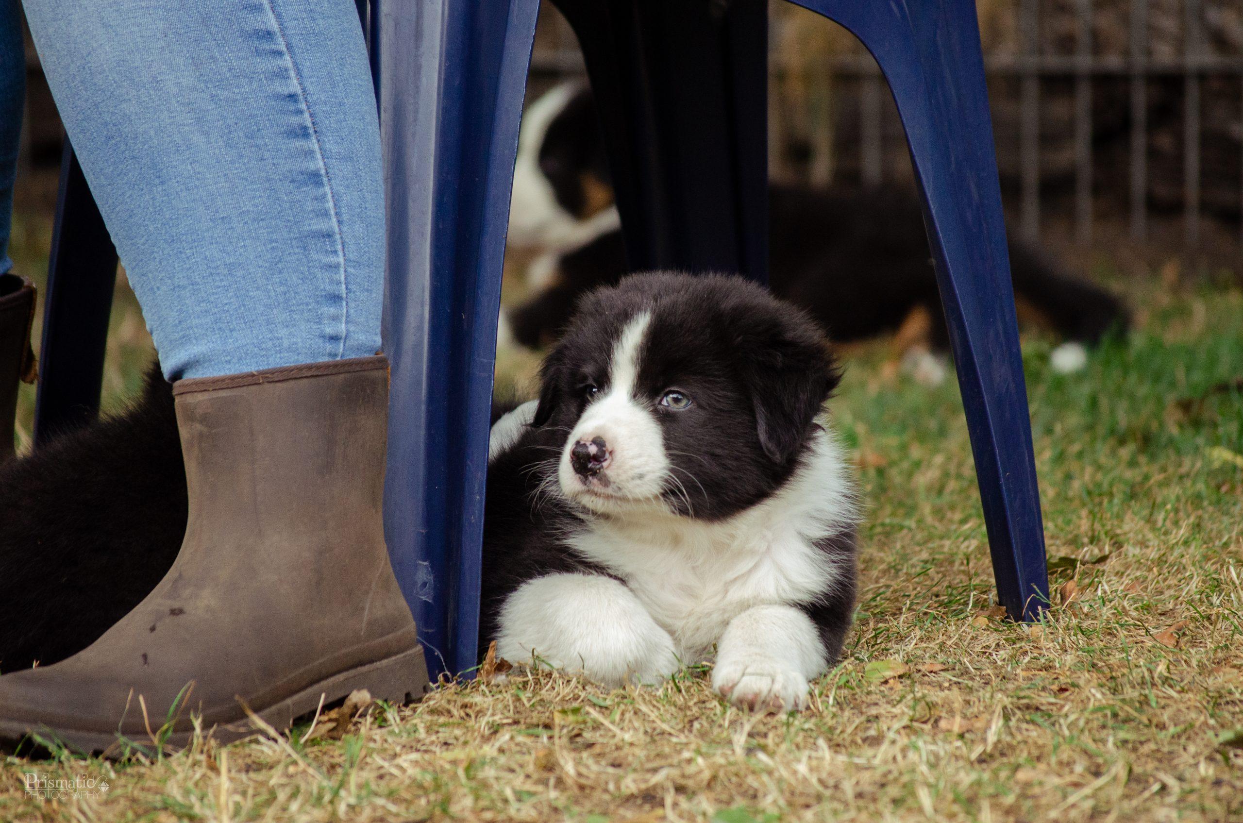 Mic auf dem Hundeplatz
