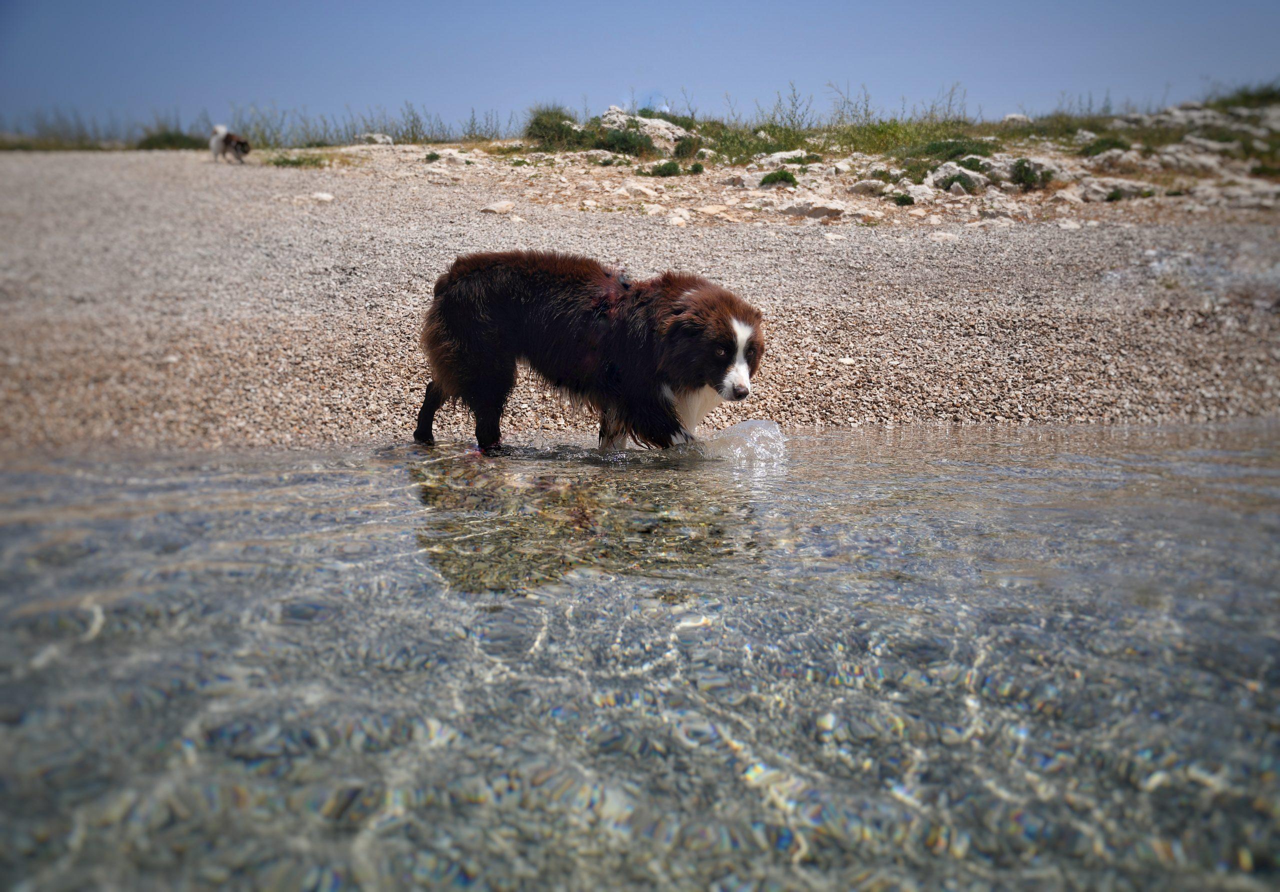 Seamus am Meer