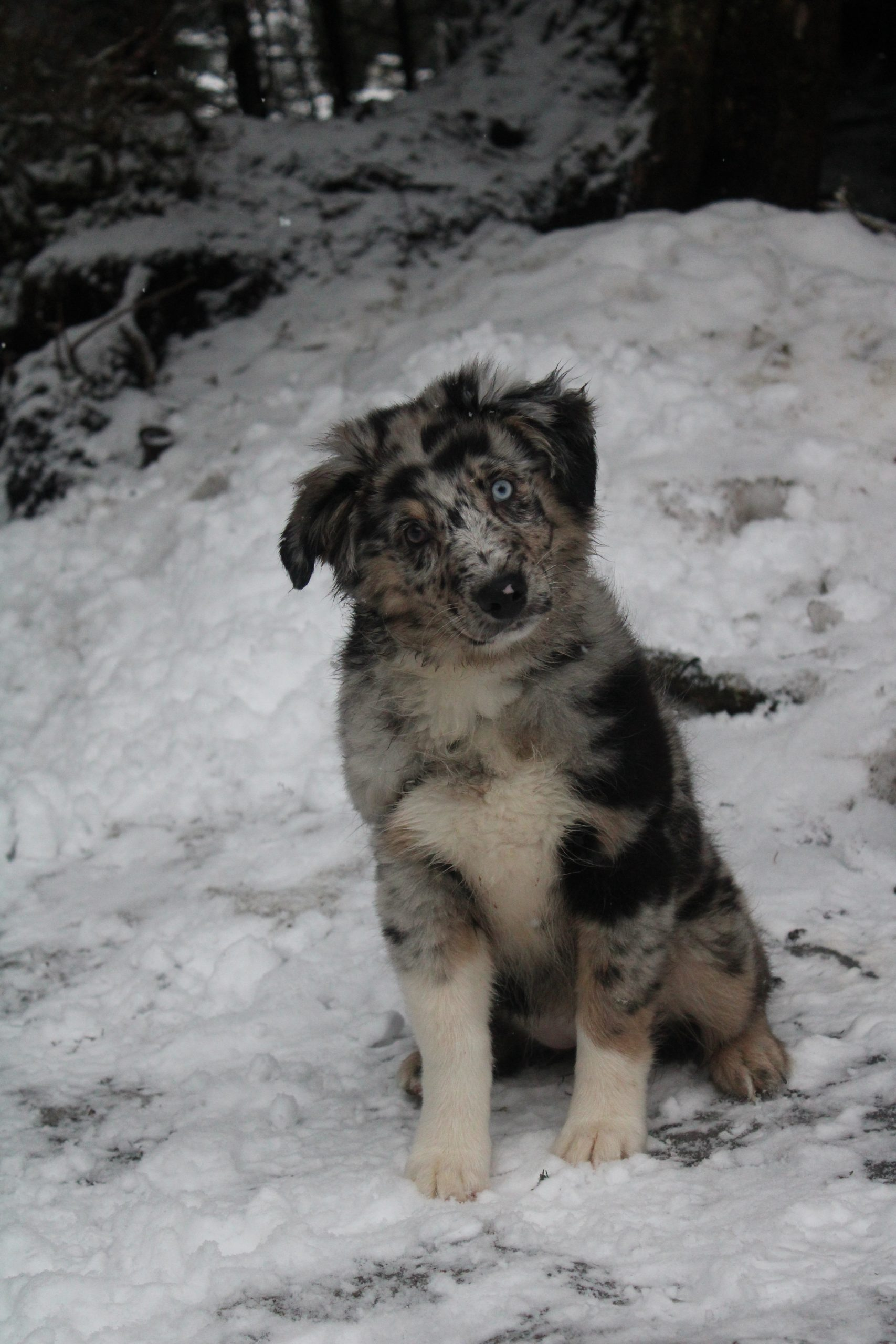 Aspen in Alaska